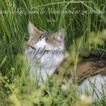 Katze_Spruch