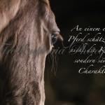 Pferd_Spruch